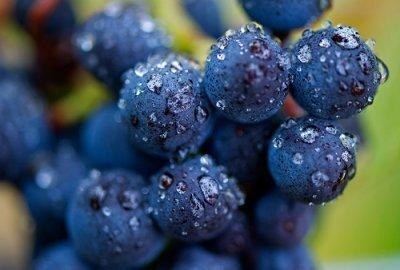 Il Pinot Nero e l'Alto Adige